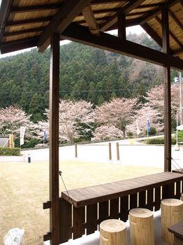 東村さんから桜の写真.jpg